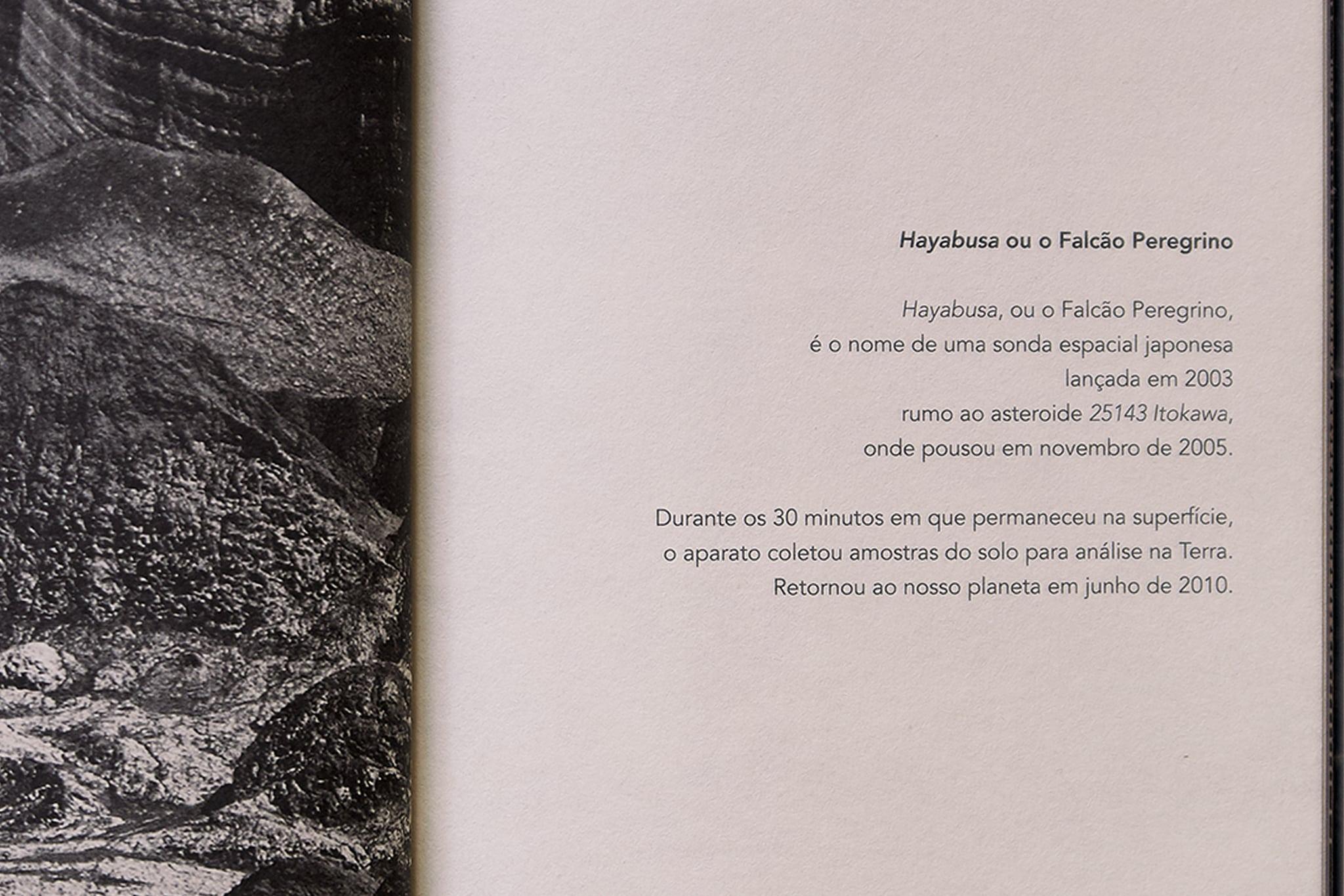 O Falcão Peregrino 5